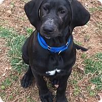 Adopt A Pet :: Chance - Richmond, VA