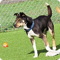 Adopt A Pet :: Turner - Meridian, ID