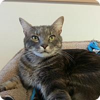 Adopt A Pet :: Chase - Chesapeake, VA