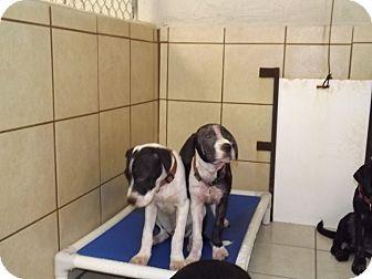 Labrador Retriever/Retriever (Unknown Type) Mix Dog for adoption in Thomaston, Georgia - May, Jax, Dora, & Jesk