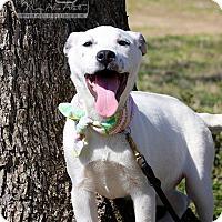 Adopt A Pet :: Claire - Wilmington, DE