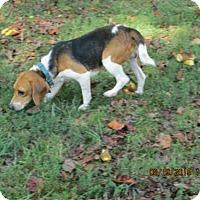 Adopt A Pet :: Jesse - Williston Park, NY