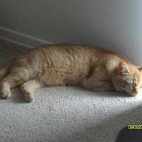 Adopt A Pet :: zz 'Maddie' courtesy post - Cincinnati, OH
