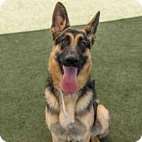 Adopt A Pet :: BELLA - Martinez, CA