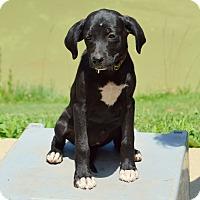 Adopt A Pet :: Clive - Pleasant Plain, OH