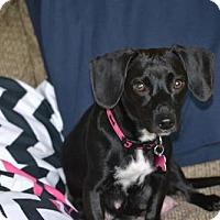 Adopt A Pet :: Gabriella - Fairfield, OH