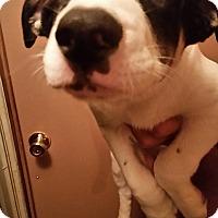 Adopt A Pet :: Allegra - Tucson, AZ