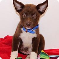 Adopt A Pet :: Batman - Glastonbury, CT