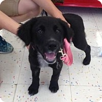 Adopt A Pet :: Bean - Hillside, IL