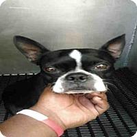 Adopt A Pet :: MIKEY - San Antonio, TX