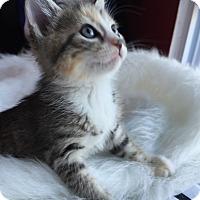 Adopt A Pet :: Tinker -Adoption Pending! - Colmar, PA