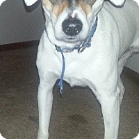 Adopt A Pet :: Milo *Courtesy Cupid* - West Allis, WI