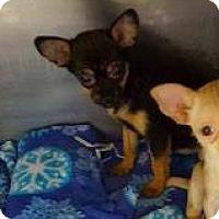 Adopt A Pet :: Topanga - Mission, KS