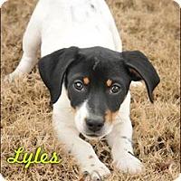 Adopt A Pet :: Lyles - Colmar, PA