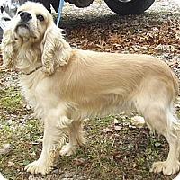 Adopt A Pet :: George - Menomonee Falls, WI