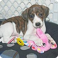 Adopt A Pet :: Penny - Minneola, FL