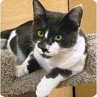 Adopt A Pet :: Chaz - Irvine, CA