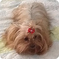 Adopt A Pet :: Tiffany - Orange, CA