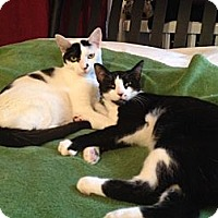 Adopt A Pet :: Monroe & Phoenix: Extra Special - Brooklyn, NY