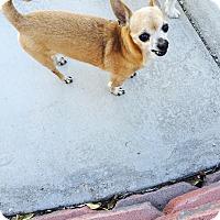 Adopt A Pet :: Nicholas - Las Vegas, NV