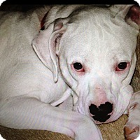 Adopt A Pet :: Sophie - China Grove, NC