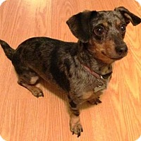 Adopt A Pet :: PENNY - Portland, OR