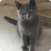 Adopt A Pet :: Smokey - Mission Viejo, CA