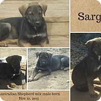 Adopt A Pet :: Sarge IN CT - Manchester, CT