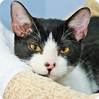 Adopt A Pet :: Lyon - Duluth, GA