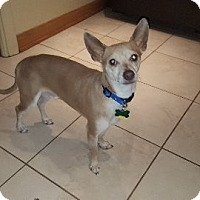 Adopt A Pet :: Mickey - Aurora, IL