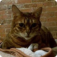 Adopt A Pet :: Isabella - Toronto, ON