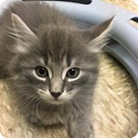 Adopt A Pet :: Sunny - Medina, OH