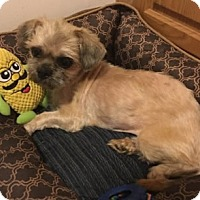 Adopt A Pet :: Lucy - Avon, NY