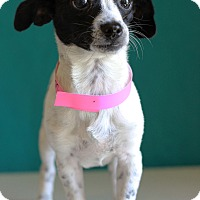Adopt A Pet :: Maddie - Waldorf, MD