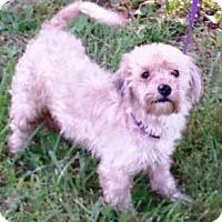 Adopt A Pet :: Princess Fiona - Oswego, IL