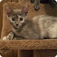 Adopt A Pet :: Margarita - Duluth, GA