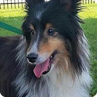 Adopt A Pet :: Phoenix - COLUMBUS, OH