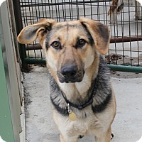 Adopt A Pet :: Todd-pre adoptable, ready 27 Oct - Priest River, ID