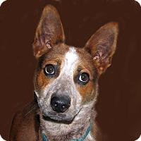 Adopt A Pet :: Alpha - Ruidoso, NM