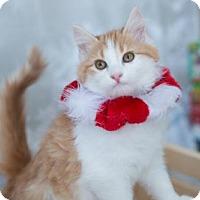 Adopt A Pet :: Bobbie - Erwin, TN