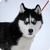 Adopt A Pet :: Zippy - Duluth, MN