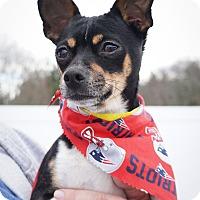 Adopt A Pet :: Honor - Holliston, MA