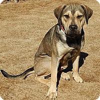 Adopt A Pet :: Remington - Athens, GA