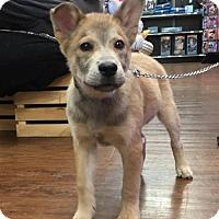Adopt A Pet :: Marley (GAPR/Fostered in TN) - Brighton, TN