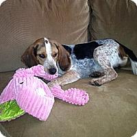 Adopt A Pet :: Jasper - Novi, MI