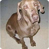 Adopt A Pet :: ERNIE - Attica, NY