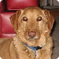 Adopt A Pet :: Brody - Evans, CO