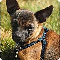 Adopt A Pet :: Manny - San Francisco, CA
