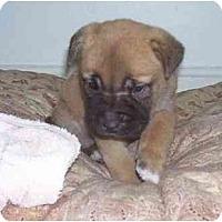 Adopt A Pet :: Mel - Chandler, IN