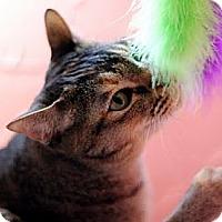 Adopt A Pet :: Ola - Alexandria, VA